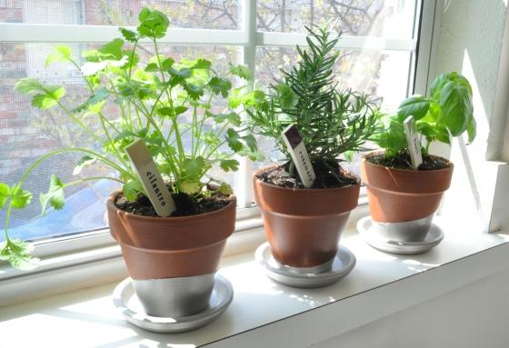 Final Herbs